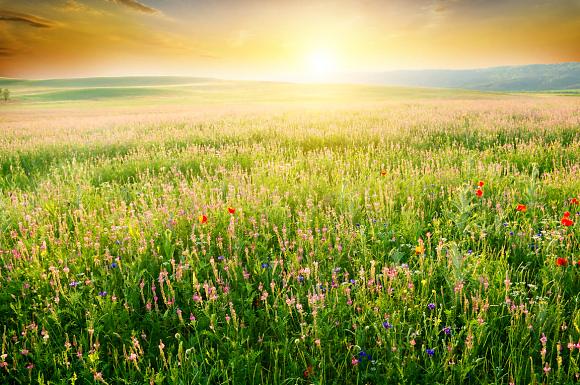Nature Farmland